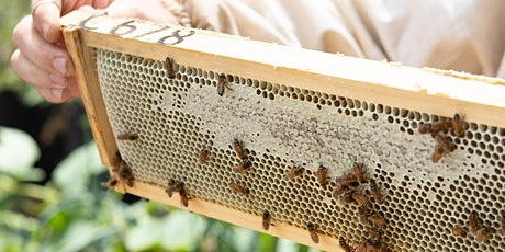 Secret Life of Bees: Open Hive Experience tickets