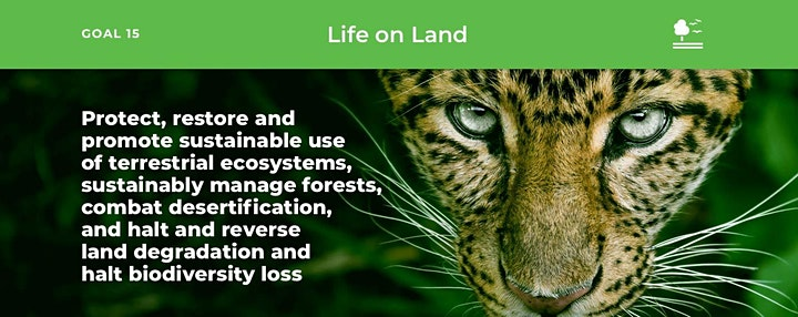 Wildlife Conservation in Africa: In the Time of COVID-19 image