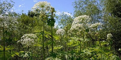 Giant Hogweed Eradication on the River Tyne, East Lothian tickets