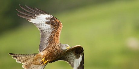 Beeston Wildlife Group Talk: A Photographers Wild Britain with Nick Martin tickets