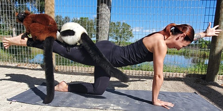 Lemur Yoga tickets