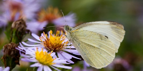 Second Saturday Workshop: Portable Pollinator Garden tickets