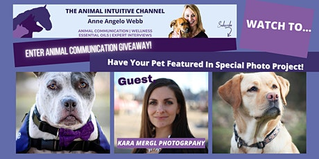 Pets & The Pandemic In Pictures AND Giveaways! tickets