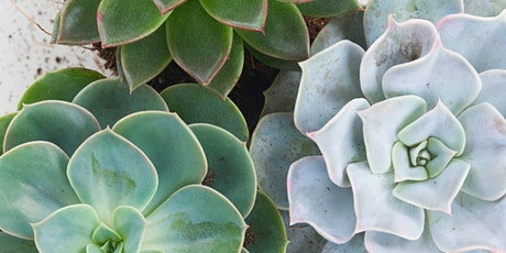 Second Saturday Workshop: Found Object Succulent Planter tickets