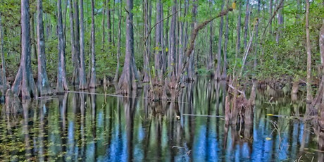 Fakahatchee Strand Preserve State Park Swamp Walk and Everglades City Visit tickets