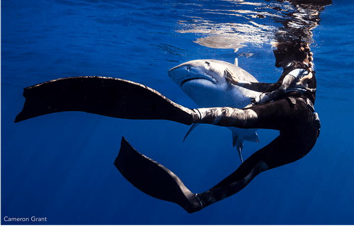 January Guest Speaker Andy Fragola: Sharks in Hawaii image