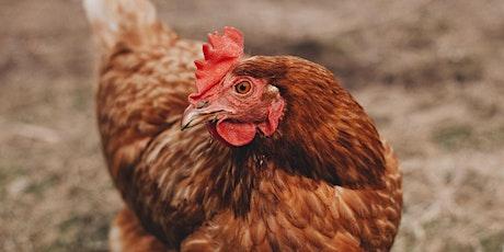 Backyard chickens - chicken health check tickets
