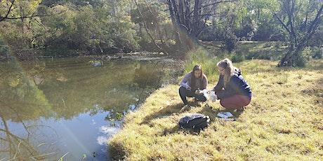 Restore Cattai Creek | Platypus, Bushcare and Water Health tickets