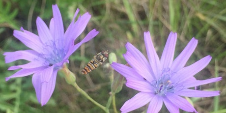 Bee Active - lend a helping hand to keep a dry grassland open tickets
