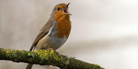 Birdsong Meditation - Wake up with Nature! tickets