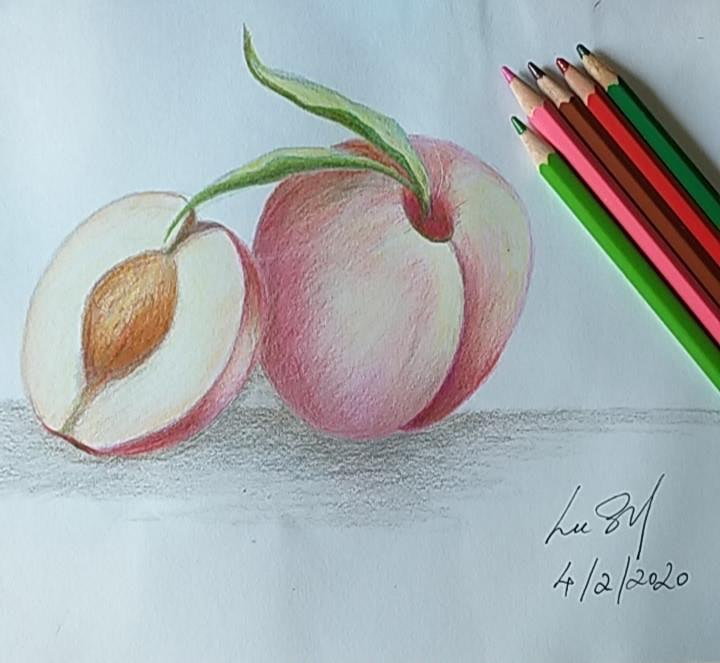 Coloured Pencil Drawing Course starts March 16 (8 sessions) image