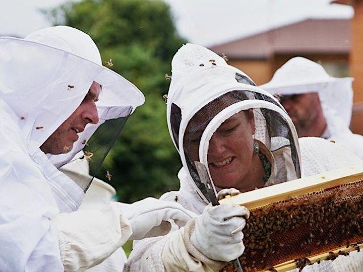 Beekeeping essentials image