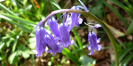 Ouaisne Common- Wildflower Botany and Folklore Walk tickets