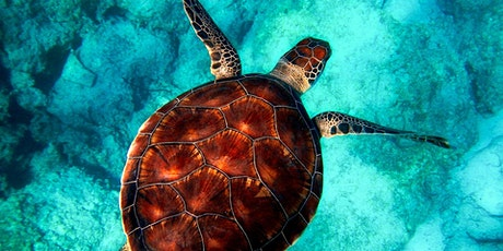 Turtle Time, Stress and Personal Resilience tickets
