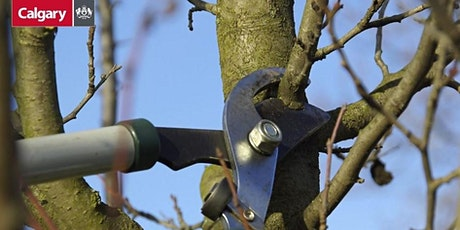 YYC Trees: Pruning Basics tickets