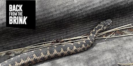 Reptile Surveys - Virtual Guide with John Baker tickets