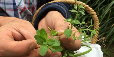 "Food foraging 101 + 5 delicious edible ""weeds"" available all over Sydney tickets"