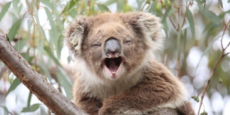 Koala Conservation Day - Transplanting koala seedlings! tickets