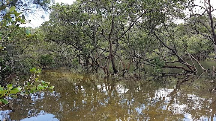 Free Guided Bushwalk - Warraroon Reserve to Tambourine Bay and return image