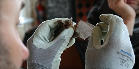 An Introduction to Scotland's Bats tickets