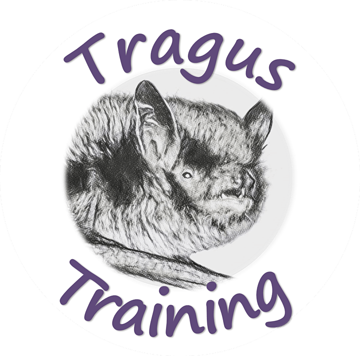 An Introduction to Scotland's Bats image