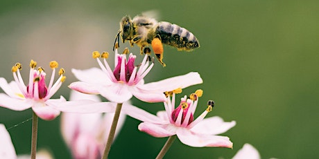 Let's Start a Pollinator Garden! tickets