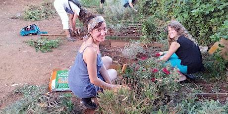 Volunteering at a plant nursery - התנדבות חקלאית במשתלה tickets