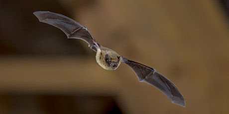 An Introduction To British Bats and How You Can Help Them tickets