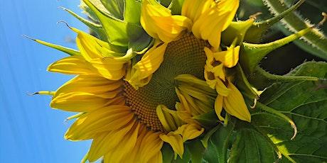 Camden Valley Farm Sunflower tickets
