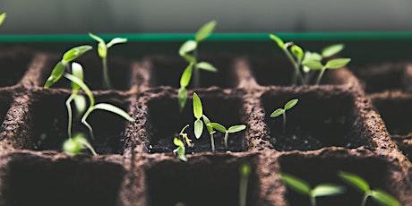 Seed Starting - Online Gardening Workshop tickets