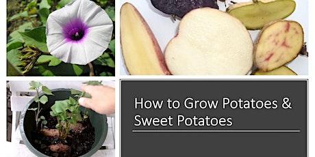 How to Grow  Potatoes & Sweet Potatoes tickets