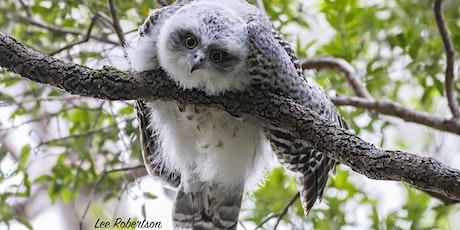 BirdLife Australia; Owl workshop & training - Sunshine Coast tickets