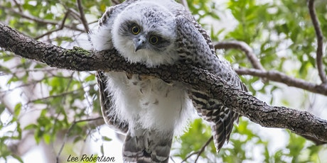 BirdLife Australia; Owl workshop & training -Kenmore tickets