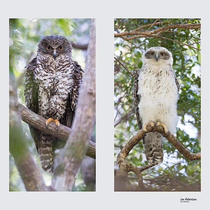 BirdLife Australia; Owl workshop & training -Kenmore image