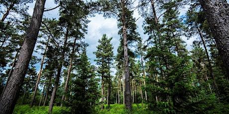 Tree health focus: conifers and Ips typographus tickets