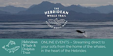 SPECIES SPOTLIGHT: Minke Whales and Basking Sharks tickets