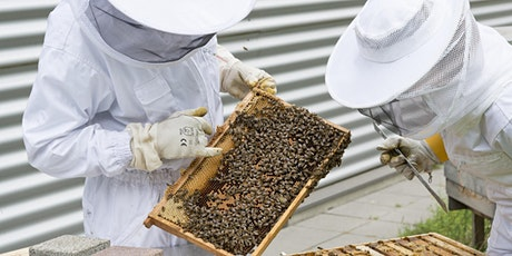 Beginning Beekeeping - Beginning Farmer and Rancher Development Program tickets
