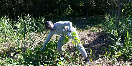 Community Volunteer Day: Introduced Shrub Removal tickets