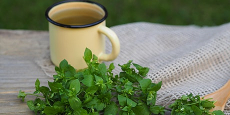 February Wild Weeds Virtual Tea Party:  Chickweed & Cosmic Connections tickets