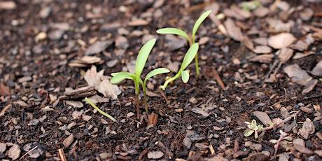 Managing Healthy Soils - Piedmont Spring Gardening Series tickets