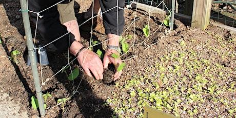 Plant & Grow a Healthy Garden - Piedmont Spring Gardening Series tickets