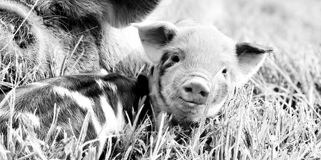 Pastured Pork Workshop tickets
