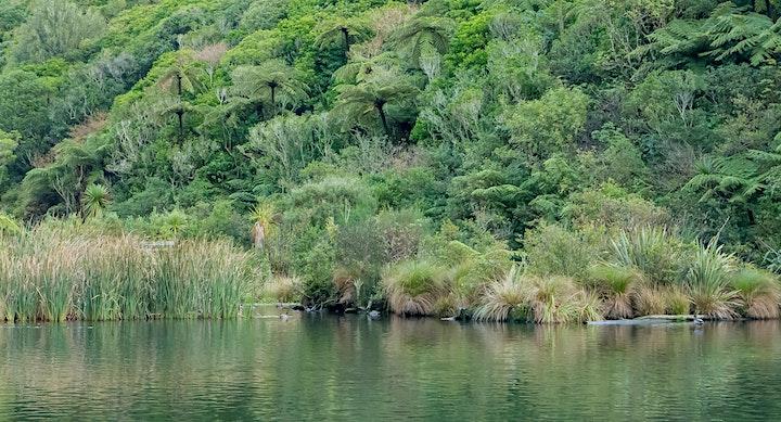 World Wetlands Celebration at ZEALANDIA image