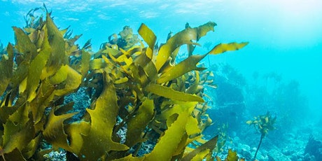Innovative uses of seaweed through history and into the future tickets