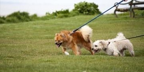 Niet trekken aan de lijn: Essentie / 1 sessie Gevorderd hond tickets