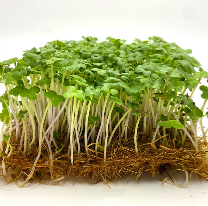 Farm Day Out Workshop: Microgreens Superfood Growing by UrbanSproutz image
