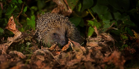 Members Only Online Talk - Hedgehogs tickets