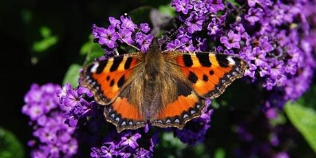 Members Only Online Talk - Butterflies and Moths on our Nature Reserves tickets