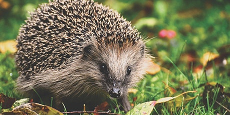 Nature Chat: Hedgehogs, Biodiversity and Citizen Science tickets