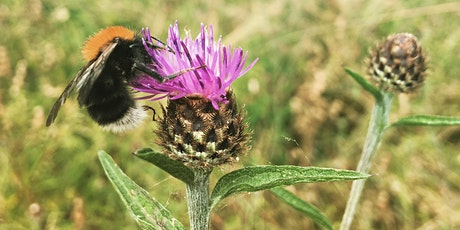 Creating, maintaining and enhancing habitat for pollinators tickets